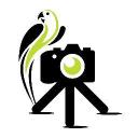Camerajungle co